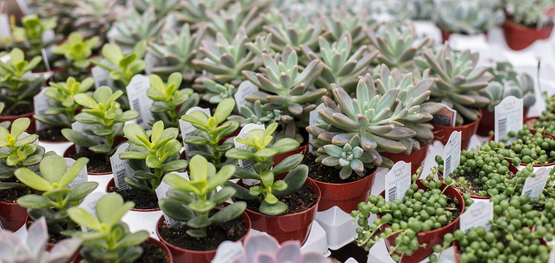 robben florist garden center flowers gardening. Black Bedroom Furniture Sets. Home Design Ideas